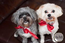 Sophi & Hitch, all decked out for the Holidays :)